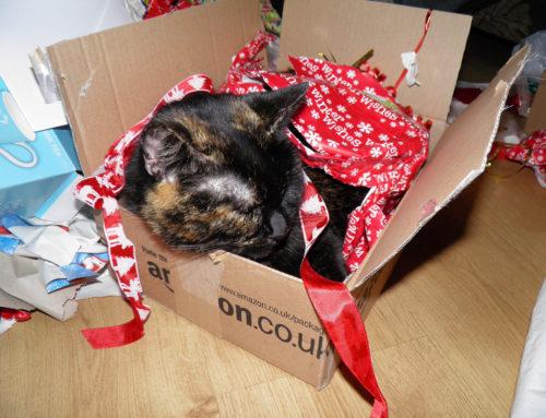 'Tis the Season for Holiday Retail Waste